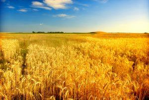Insurance for Farmers Longview Texas