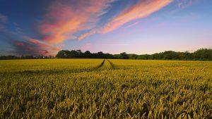 Farm Insurance Winnsboro Tx
